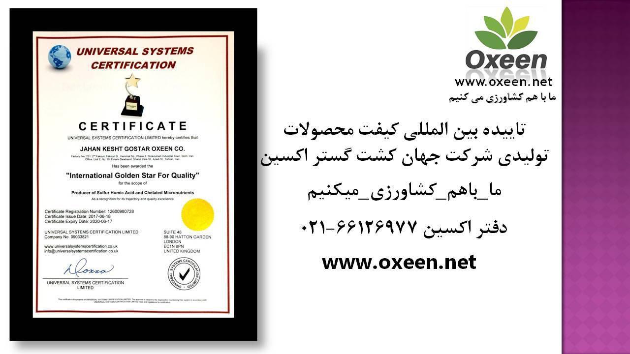 Certificate International Golden Star For Quality